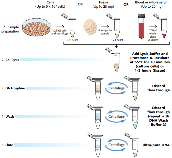Lysis Buffer Recipe For Rna Extraction: Cell Lysis Buffer Recipe For Dna Extraction
