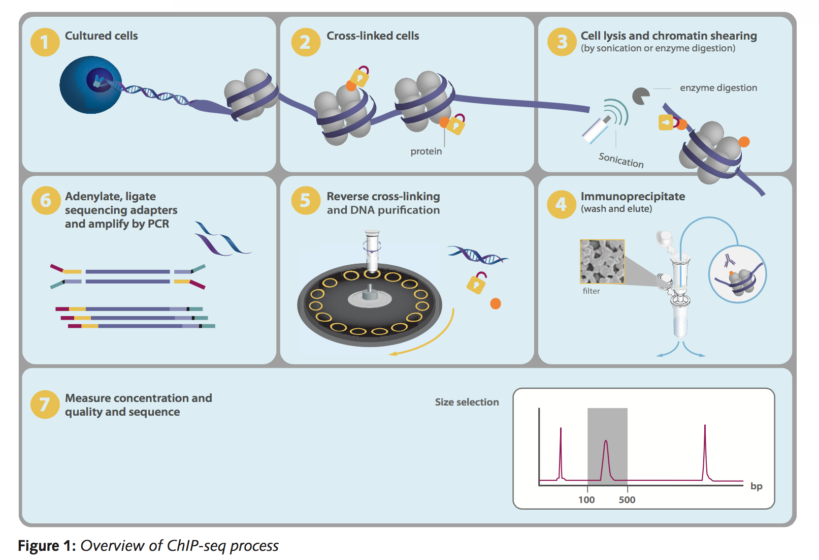 Chromatrap ChIP-Seq Workflow